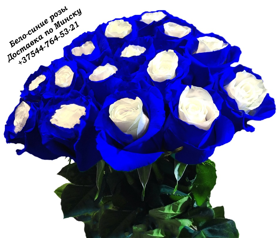 Blue%20rose%20%D0%91%D0%B5%D0%BB%D0%BE%2